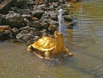χελώνα πηγών Στοκ Εικόνα