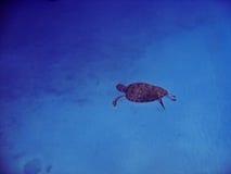 χελώνα πράσινης θάλασσας στοκ εικόνες