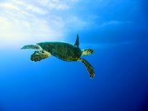 χελώνα πράσινης θάλασσας Στοκ εικόνες με δικαίωμα ελεύθερης χρήσης