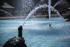 Χελώνα στην πόλη στοκ φωτογραφίες με δικαίωμα ελεύθερης χρήσης