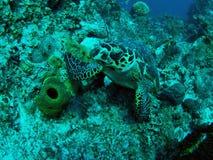 χελώνα υποβρύχια Στοκ φωτογραφία με δικαίωμα ελεύθερης χρήσης