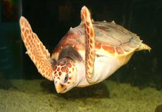 χελώνα Στοκ φωτογραφίες με δικαίωμα ελεύθερης χρήσης