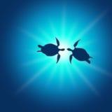 χελώνα caretta Απεικόνιση αποθεμάτων