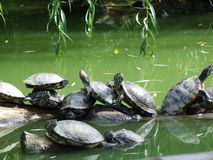 Χελώνες στο ζωολογικό κήπο στο Ζάγκρεμπ στοκ φωτογραφία με δικαίωμα ελεύθερης χρήσης