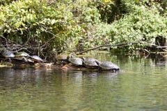 χελώνες Στοκ Φωτογραφίες