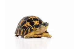 Χελώνα εδάφους Στοκ εικόνα με δικαίωμα ελεύθερης χρήσης