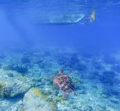 Χελώνα θάλασσας κάτω από τη βάρκα Το Tortoise κολυμπά υποβρύχιο στην μπλε τροπική θάλασσα Στοκ Εικόνες