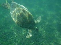 Χελώνα θαλασσίως Στοκ φωτογραφίες με δικαίωμα ελεύθερης χρήσης