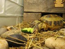 Χελώνα δια ξηράς Στοκ φωτογραφία με δικαίωμα ελεύθερης χρήσης