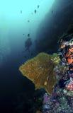 Χελώνα πράσινης θάλασσας, νησί Sipadan, Sabah Στοκ εικόνα με δικαίωμα ελεύθερης χρήσης