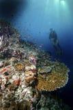 Χελώνα πράσινης θάλασσας, νησί Sipadan, Sabah Στοκ φωτογραφία με δικαίωμα ελεύθερης χρήσης