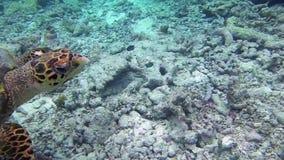 Χελώνα στη θάλασσα απόθεμα βίντεο