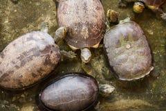 Χελώνα στο αγρόκτημα κροκοδείλων Samut Prakan και το ζωολογικό κήπο, Ταϊλάνδη Στοκ φωτογραφίες με δικαίωμα ελεύθερης χρήσης