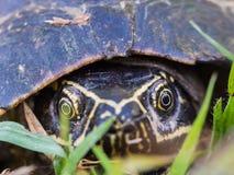 Χελώνα Armature Στοκ φωτογραφίες με δικαίωμα ελεύθερης χρήσης