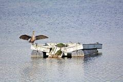 Χελώνες και μεγάλη πάπια Στοκ εικόνες με δικαίωμα ελεύθερης χρήσης
