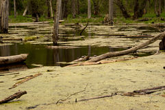 Χελώνες σε ένα κούτσουρο στοκ εικόνα
