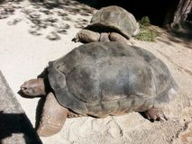 χελώνες στοκ εικόνες