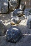 Χελώνες, 2015 στοκ φωτογραφία