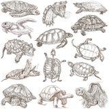 Χελώνες - Freehands, σύνολο - μεγέθους σχέδια χεριών Στοκ φωτογραφία με δικαίωμα ελεύθερης χρήσης