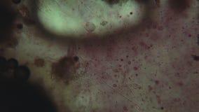 Χημικές αντιδράσεις κάτω από το μικροσκόπιο απόθεμα βίντεο
