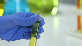 Χημικός εργαζόμενος εργαστηρίων που εξετάζει το σωλήνα δοκιμής με την ουσία αρώματος, cosmetology απόθεμα βίντεο
