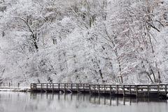 Ακτή λιμνών το χειμώνα Στοκ Φωτογραφία