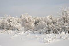 Χιονισμένα δέντρα σε ένα χιονώδες χειμερινό δάσος Στοκ φωτογραφίες με δικαίωμα ελεύθερης χρήσης