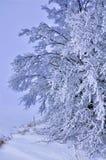 Χιονισμένα δέντρα στους λόφους του χιονιού Στοκ εικόνα με δικαίωμα ελεύθερης χρήσης