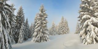 Χιονισμένα δέντρα στο δάσος στοκ εικόνα