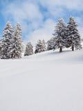 Χιονισμένα δέντρα στοκ εικόνα