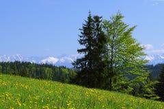 Χιονισμένα βουνά Tatra πέρα από ένα δάσος στοκ εικόνες