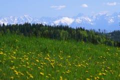 Χιονισμένα βουνά Tatra πέρα από ένα λιβάδι στοκ φωτογραφίες με δικαίωμα ελεύθερης χρήσης