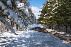 Χιονισμένα δέντρα κέδρων κατά μήκος του δρόμου μια ηλιόλουστη χειμερινή ημέρα στοκ φωτογραφία