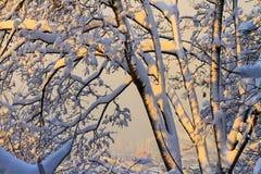 Χιονισμένα δέντρα στις απόψεις ηλιοβασιλέματος και πόλεων Στοκ Εικόνες