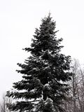 Χιονισμένα δέντρα στο βουνό στοκ εικόνες με δικαίωμα ελεύθερης χρήσης