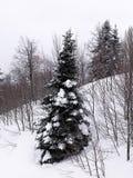 Χιονισμένα δέντρα στο βουνό στοκ φωτογραφίες με δικαίωμα ελεύθερης χρήσης
