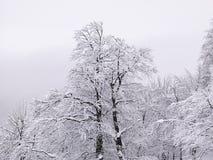 Χιονισμένα δέντρα στο βουνό στοκ φωτογραφίες