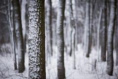 Χιονισμένα δέντρα στο χειμερινό δάσος Στοκ φωτογραφίες με δικαίωμα ελεύθερης χρήσης