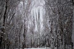 Χιονισμένα δέντρα στο όμορφο πάρκο πόλεων στον όμορφο χειμώνα στοκ φωτογραφία με δικαίωμα ελεύθερης χρήσης