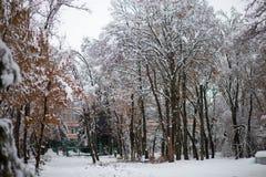 Χιονισμένα δέντρα στο όμορφο πάρκο πόλεων στον όμορφο χειμώνα στοκ φωτογραφία