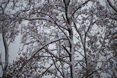 Χιονισμένα δέντρα στο όμορφο πάρκο πόλεων στον όμορφο χειμώνα στοκ εικόνα με δικαίωμα ελεύθερης χρήσης