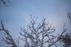 Χιονισμένα δέντρα στο όμορφο πάρκο πόλεων στον όμορφο χειμώνα στοκ φωτογραφίες