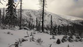 Χιονισμένα πεύκα, άσπρα σύννεφα και τα βουνά απόθεμα βίντεο