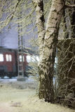 Χιονισμένα σημύδα και τραίνο Στοκ φωτογραφία με δικαίωμα ελεύθερης χρήσης