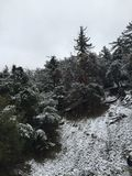 χιονισμένα branchs στοκ φωτογραφίες με δικαίωμα ελεύθερης χρήσης