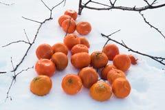 Χιονισμένα tangerines σε αργή κίνηση Στοκ εικόνες με δικαίωμα ελεύθερης χρήσης