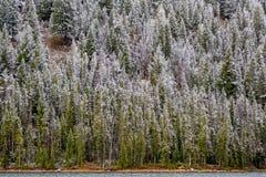 Χιονισμένες δάσος και λίμνη Frehs Στοκ Εικόνες