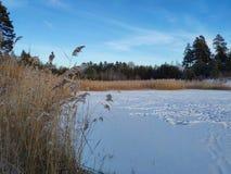 Χιονισμένη δασική λίμνη και αυστηρός παγετός στοκ εικόνες