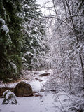 Χιονισμένη πορεία με τα δέντρα Στοκ εικόνες με δικαίωμα ελεύθερης χρήσης