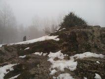 Χιονισμένοι βράχος & εγκαταστάσεις Στοκ φωτογραφίες με δικαίωμα ελεύθερης χρήσης